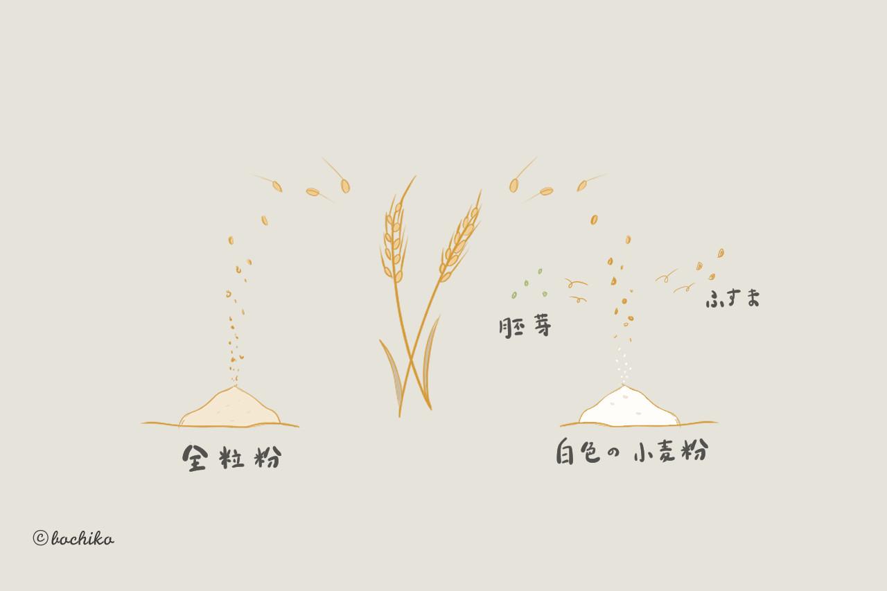 全粒粉とは?小麦粉との違いは?